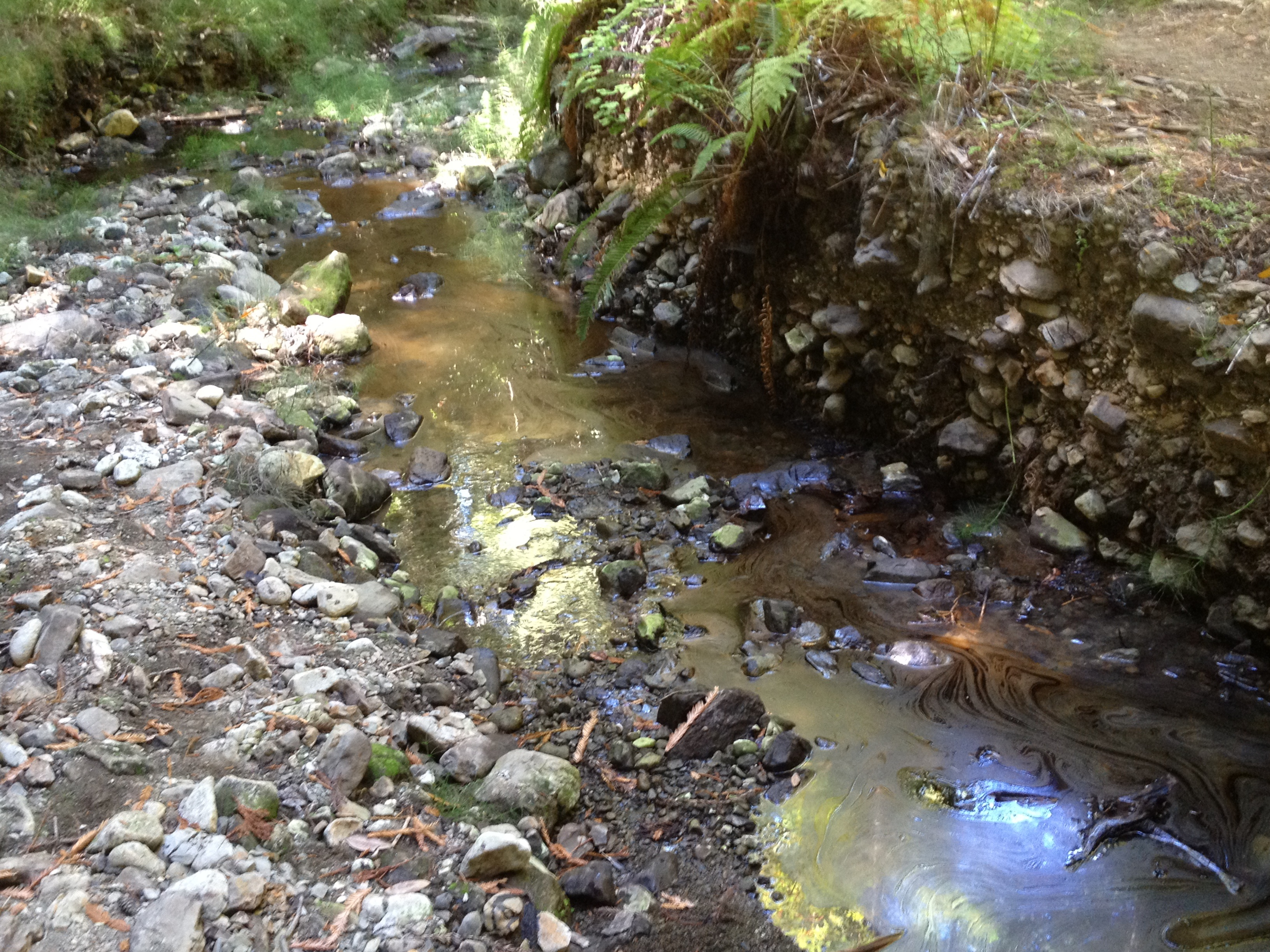 California san mateo county pescadero - Indeed There Is A Natural Oil Occurrence In The Appropriately Named Tarwater Creek In Pescadero Creek County Park Quotation From The Park S Website