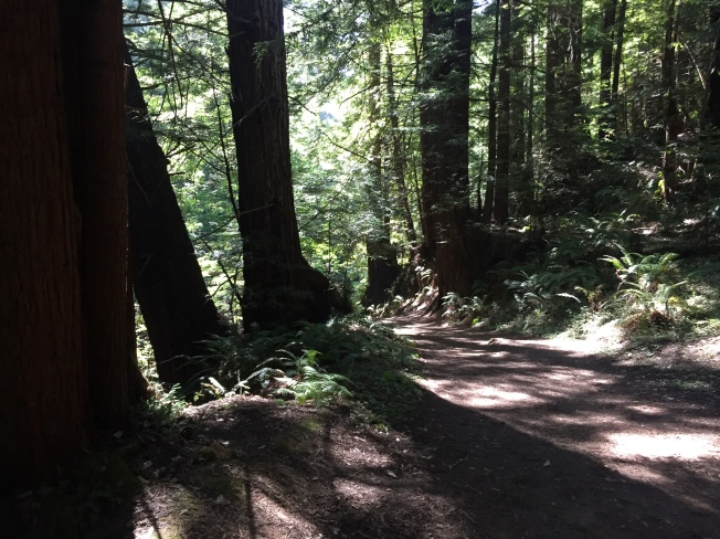 Lower parts of Purisima Creek Trail
